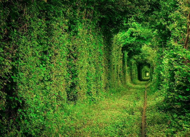 """Результат пошуку зображень за запитом """"тоннель любви"""""""